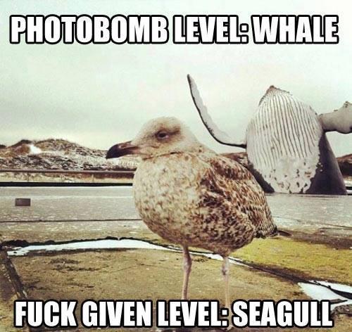 Funny Animal Memes - photobomb level