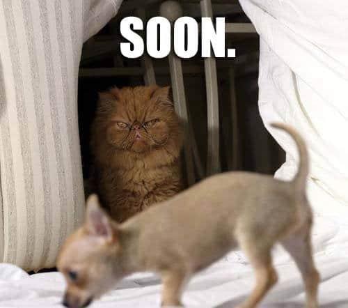 Funny Animal Memes - soon enough