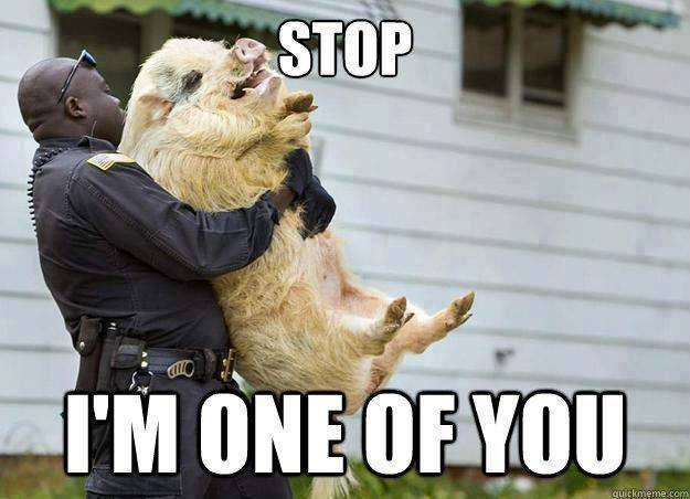 Funny Animals Memes - im one of you