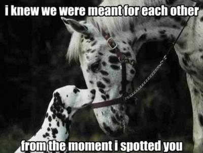 Funny Memes - meant for each other