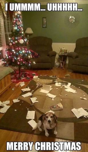 Funny Memes - merry christmas