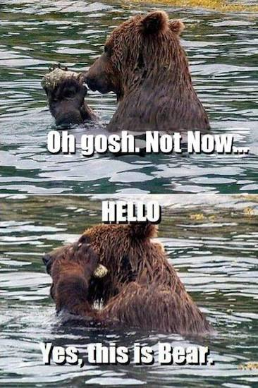 Funny Memes - yes this is bear