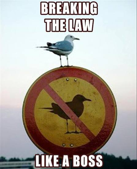 Funny Memes: breaking the law