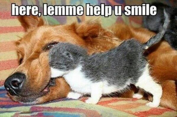 Animal Memes - help you smile