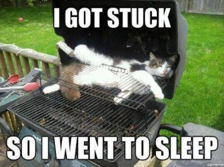 Animal Memes - i got stuck