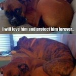 Funny Animal Memes - my little baby