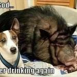 Funny Animal Memes - never drinking again