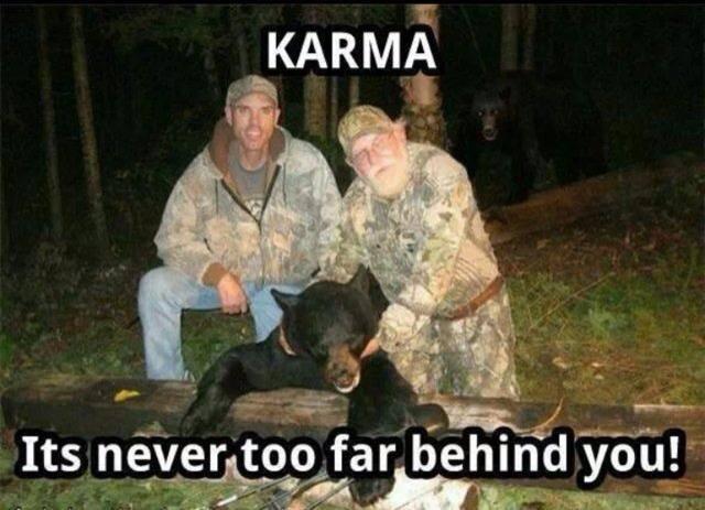 Funny Animal Memes - never far behind