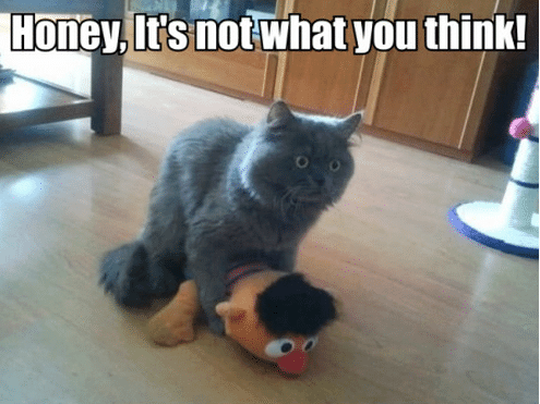 Funny Animal Memes - not what you think