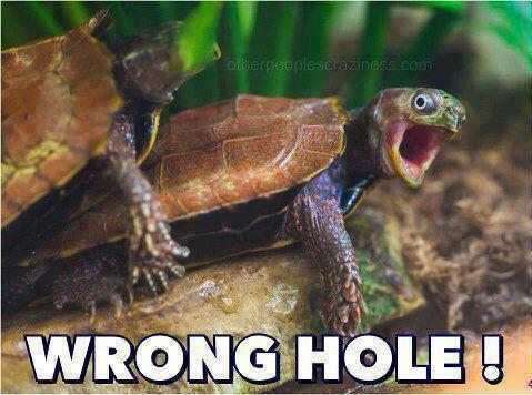 Funny Animal Memes - wrong hole