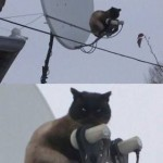 Funny Animal Memes - you will watch