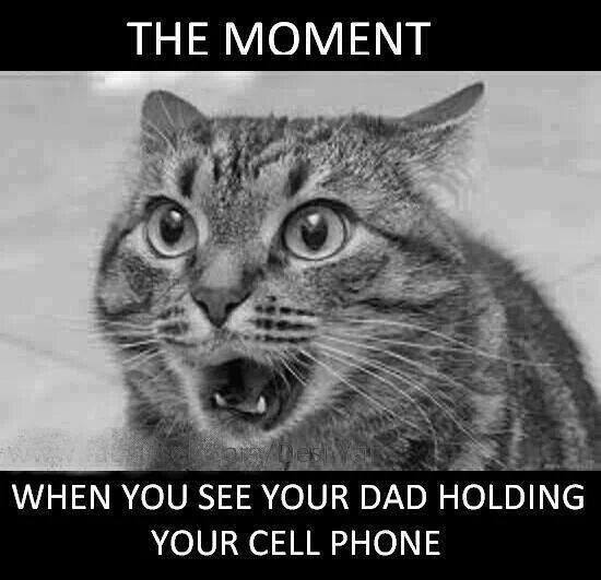 Funny Animal Memes - your dad