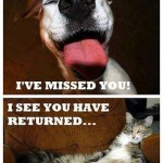 Funny Animal Memes - youre home