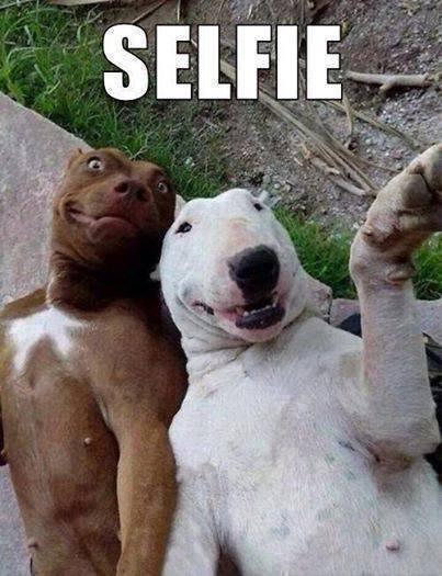 Animal Memes - doggie selfie