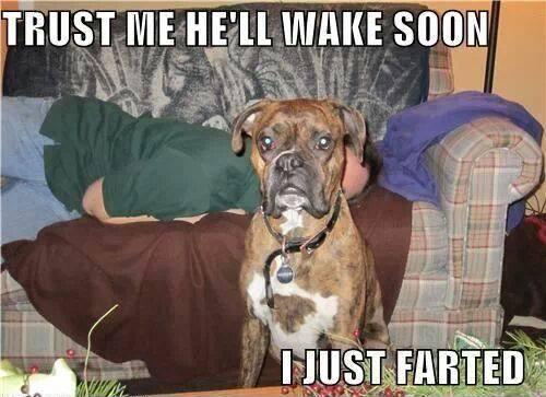 Animal Memes - i just farted