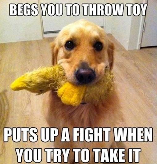 Animal Memes: begs you