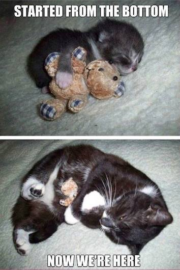 Animals Memes - cuddly kitty