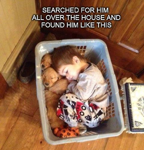 Funny Animal Memes - puppies in a basket