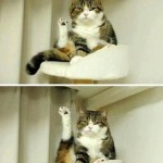Funny Animals Memes - look at it