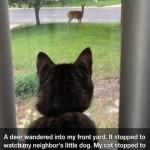 Animal Memes - everyone watching