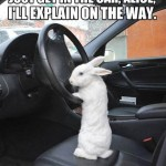 Funny Animal Memes - just get in