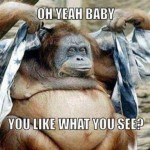 Funny Animal Memes - like what you see