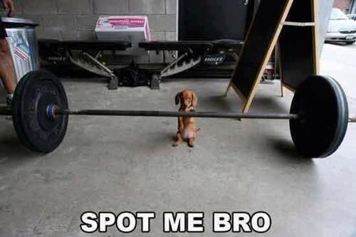 Funny Animal Memes - spot me bro