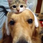 Funny Animal Memes - thinking cat on