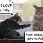 Funny Animal Memes - you gave me fleas