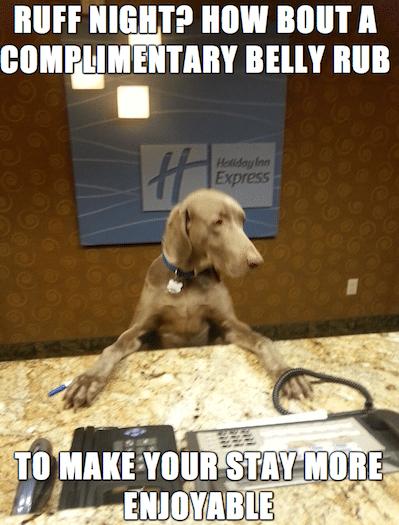 Animal Memes - complimentary belly rub