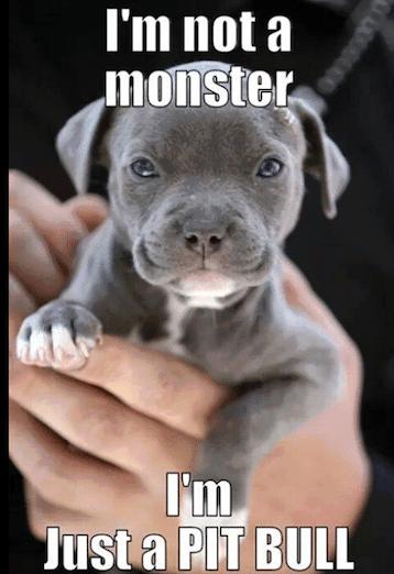 Funny Animal Memes - not a monster