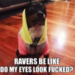 Funny Animal Memes - raver doggie