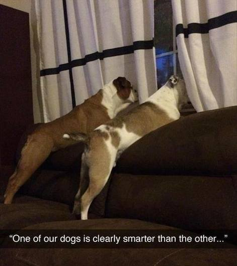 Funny Animal Memes - smarter dog