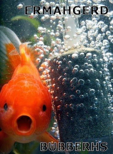 Funny Animal Memes - surprised gold fish