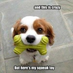 Funny Animal Memes - throw it maybe