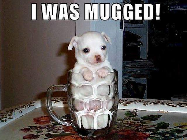 Funny Animals Memes - i was mugged