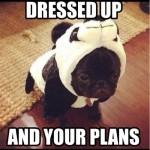 Funny Animal Memes - tumblr nab0knEiBJ1tdu5two1 500