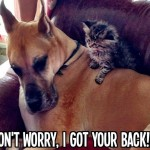 Animal Memes: best buddies