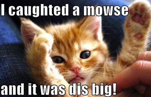 Animals Memes: cat mouse