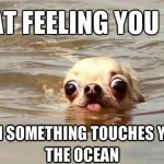 Funny Animal Memes - what was that