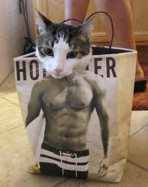 Funny Animals Memes - Meow