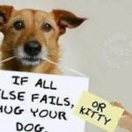 Funny Memes - Animal Memes - good advice