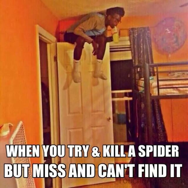 Funny Memes - Spider lol